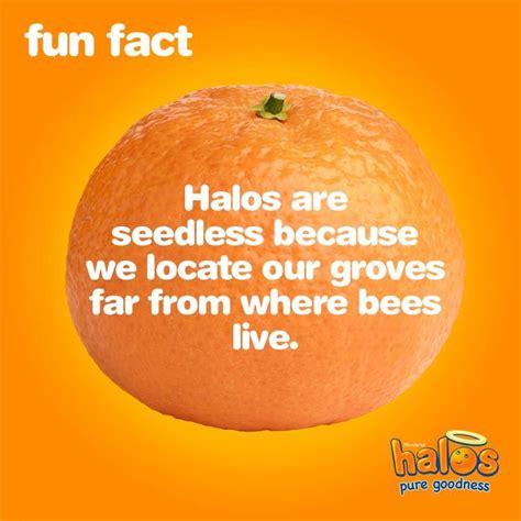 34 Halo Mandarin Oranges Nutrition Label Labels For You