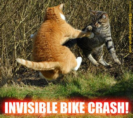 Invisible Cat Memes - invisible lolcats funny captioned cat pics with invisible things in them