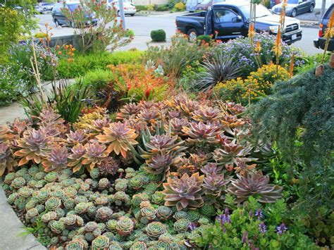 succulents outdoors tips for growing succulents outdoors world of succulents