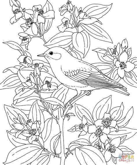 mountain bluebird  lewiss mock orange idaho bird  flower coloring page  printable