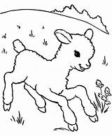 Lamb Coloring Sheep Pages Running Aroung Meadow Outline Drawing Template Sheet Printable Getdrawings Sheeps Called Alpha Male Sketch Coloringsky Getcoloringpages sketch template