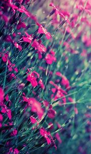 Beautiful Pink Flowers Free 4K Ultra HD Mobile Wallpaper