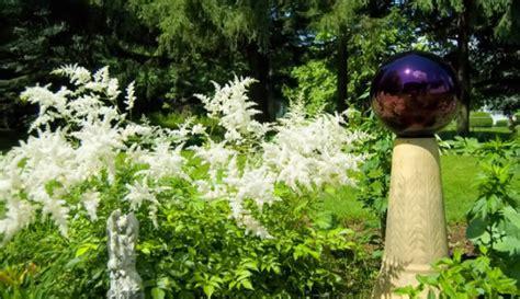 Graciozais krāšņums dārza ēnainajā pusē - astilbes - DELFI