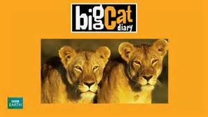 big cat diary 12 days of netflix finds big cat diary butterflies and