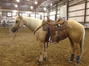 Horse Barrel Racing Horses for Sale