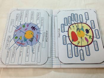 cells interactive notebook pages  kesler science tpt