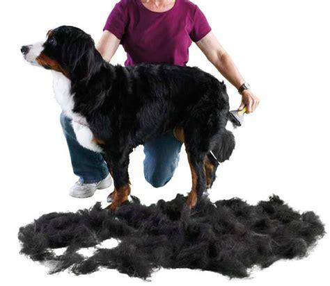 hair shedding solutions pet shedding tools shedmonster de shedding