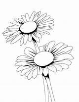 Protea Bestcoloringpagesforkids sketch template
