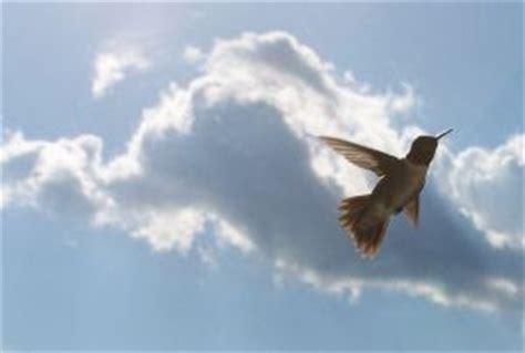 wild birds unlimited do hummingbirds migrate together