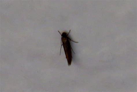 kleine fliegen im bad kleine fliegen im bad und k 252 che das bad renovieren modernisierung tisch in der k 252 che
