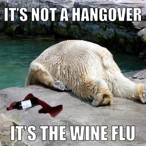 Funny Hangover Memes - 44 best images about wine memes and humor on pinterest christmas parties wine cellar and