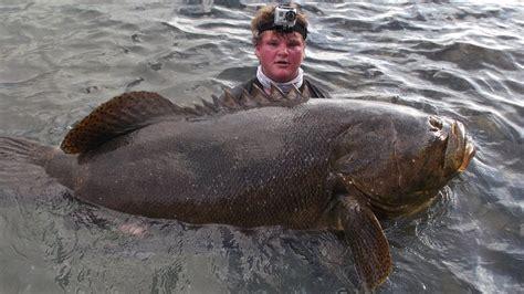 jewfish grouper goliath fishing bridge monster