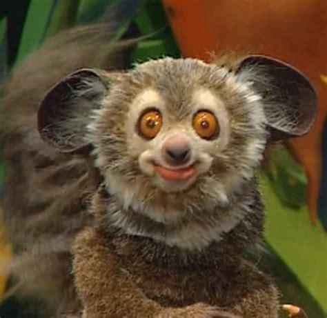 billy bob  lemur muppet wiki wikia
