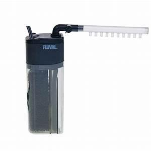 Come allestire un acquario di acqua dolce accessori per