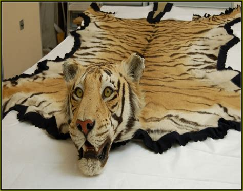 Skin Rug With by Faux Tiger Skin Rug Home Decor