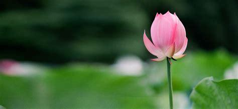 lotus greens real estate developers in noida gurgaon