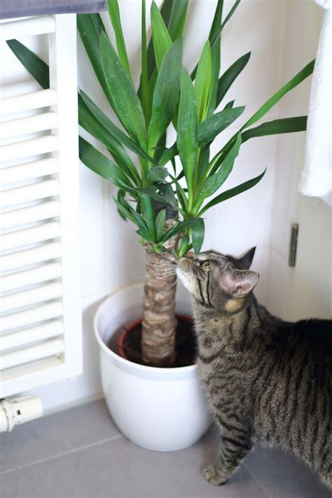 Pflanzen Im Badezimmer by Pflanze Benjamin Im Badezimmer Die Richtigen Pflanzen