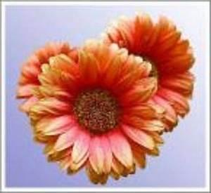 Learn How Does A Daisy Reproduce