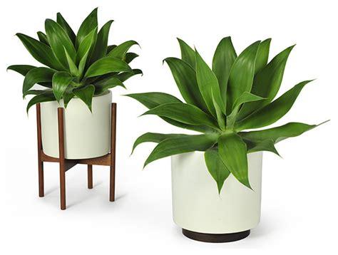 modernica study planter w plinth white modern