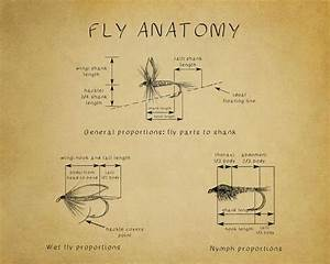Fly Fishing Poster Fly Tying Diagram Fly Fishing Print