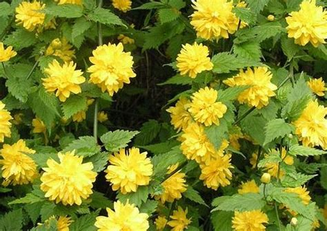 Our Pick Of The Top 5 Flowering Shrubs Powerscourt