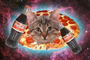 pizza cat caterville pizza cat gifs
