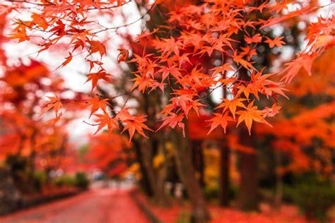 vibrant seasonal landscape photography seasonal