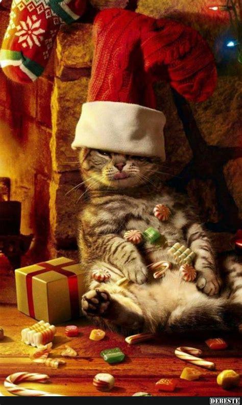 schoenes weihnachtsfest lustige bilder sprueche