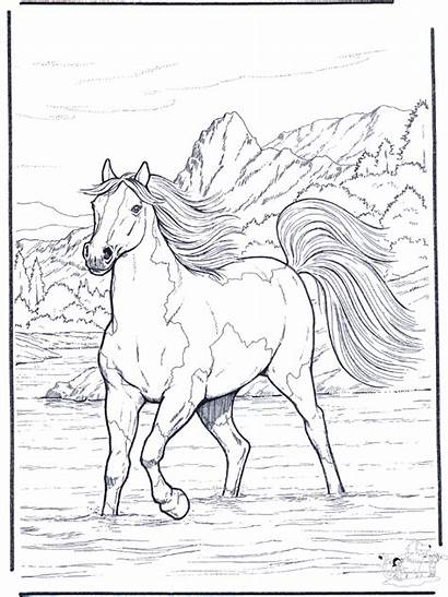 Coloring Horse Pages River Horses Realistic Colouring