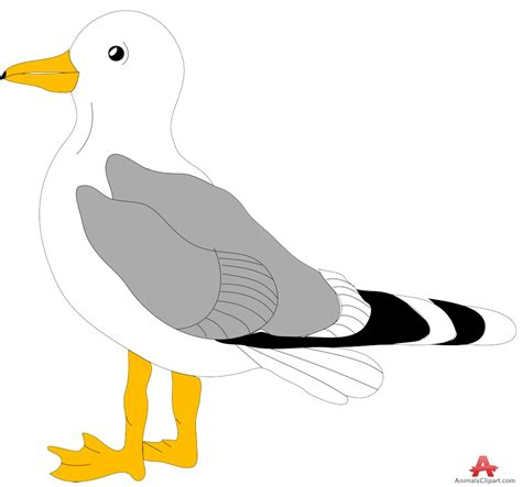 Seagull Clipart Seagull Clipart Clipground
