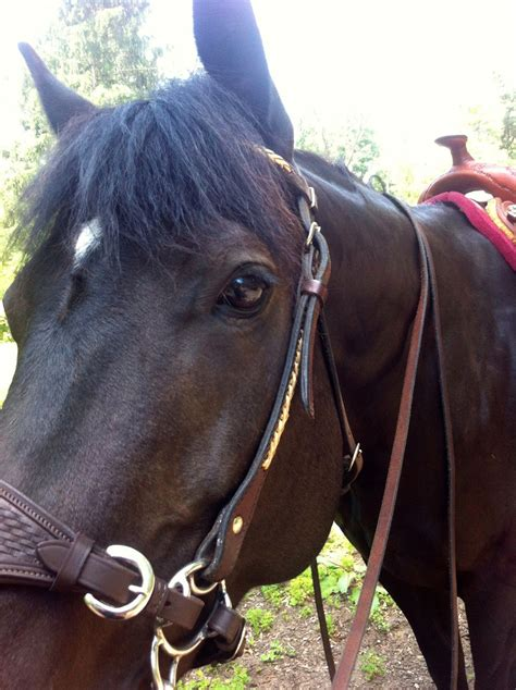 bitless bridle hooves journey molly mouth better put
