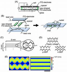 Structural Overview Of The Dielectrophoresis  Dep  Device