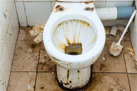 rat dans les toilettes tag piscine nonymous fr