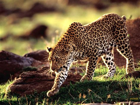 Animal Photo Wallpaper - animal wallpaper animal animal mating