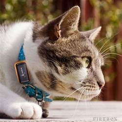 5 cat gps trackers you should see slash pets
