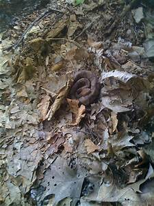 Northern Copperhead Snake | Flickr - Photo Sharing!