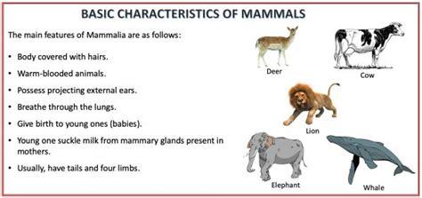 Animal Kingdom Classification Characteristics And
