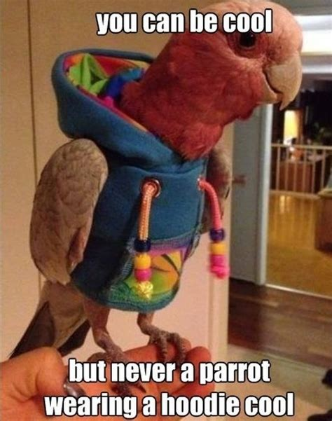 Parrot Meme - best meme parrot