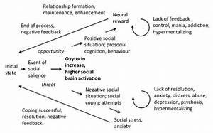 Testosterone V Oxytocin  Bridging The Gene