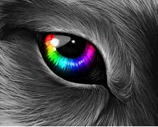 Colorful Eye Art Colorful wolf eye by  Colorful Wolf Painting