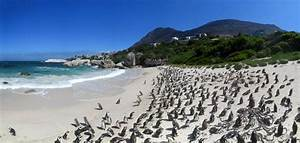 Cape of Good Hope and Franschhoek | The Modern Nomad