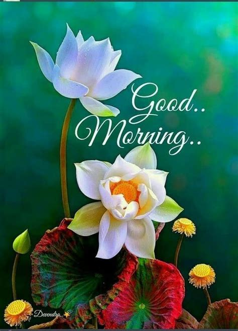 floral good morning graphic pictures   images