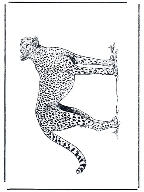 gepard malvorlagen katzenartigen