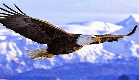 gambar tato  elang markasd