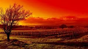 Wallpaper tree, sunset, autumn, vineyard, red desktop ...
