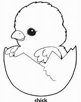Chick Coloring Pages Easter Chicken Baby Printable Chicks Template Egg Cute Chook Sheet Sheets Templates Adorable Ever Most Crafts Chickens sketch template