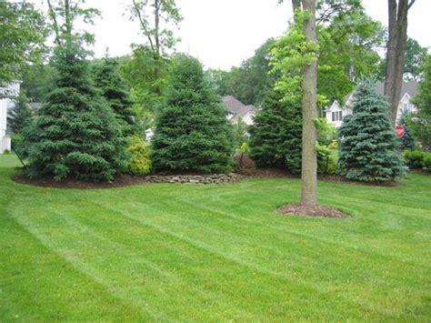 landscape screening trees joyful privacy landscaping decor ideas pinterest privacy landscaping landscaping and joyful