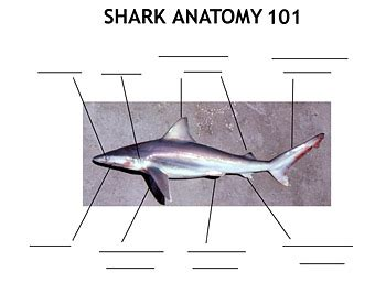 shark classroom activities discover fishes