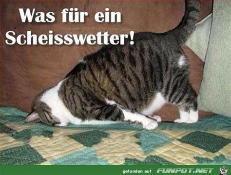 scheisswetter tiere katzen lustiges und lustige bilder