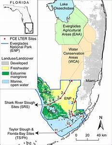 Abiotic Factors In Everglades Html
